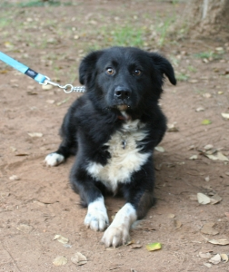 Foster A Border Collie - Adopt A Pet