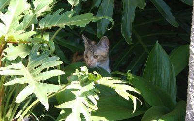 Lost Kitten Rehomed