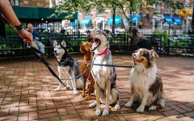 Understanding Dog Talk for Humans