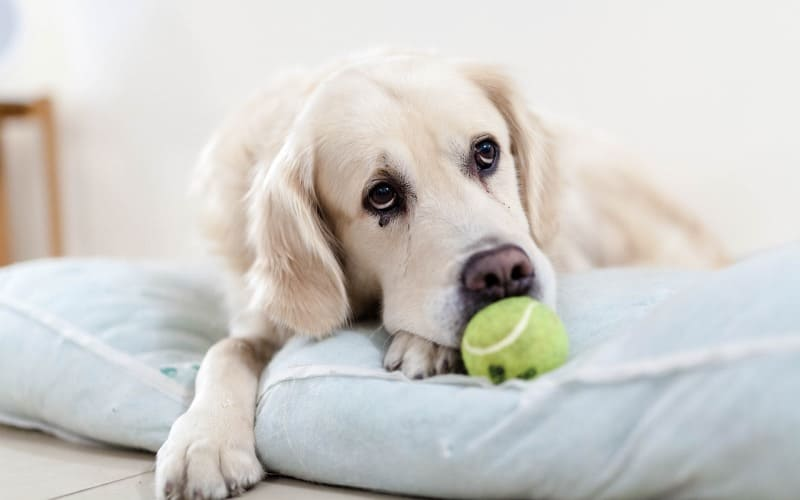 Do Pets Grieve And How To Help Them