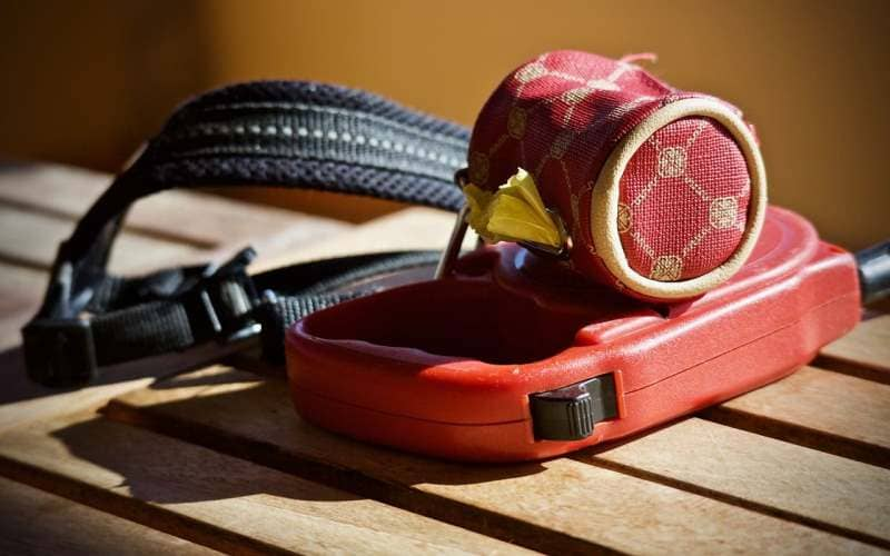 How to choose the best leash and collar for your dog